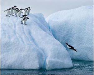 ペンギン ファースト